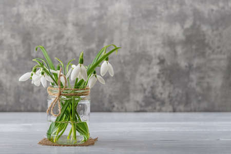 White fragile snowdrops in a glass jar with bow against gray background. Small beautiful bouquet of the first spring flowers Galanthus Nivalis. Vintage spring greeting card. Copy space. Front view.