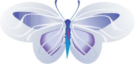 lepidoptera: Butterfly,