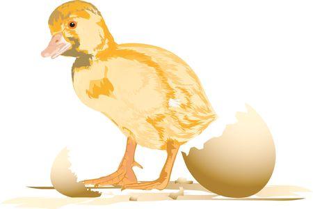 Duckling,