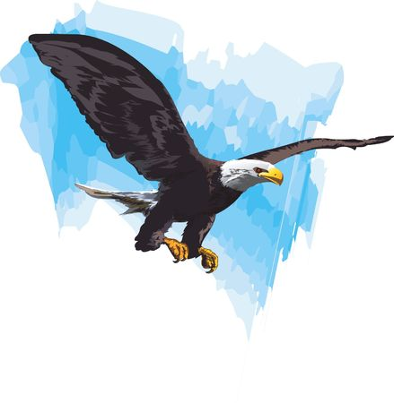 Eagle, Illustration