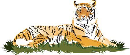 Tiger Stock Vector - 1372895