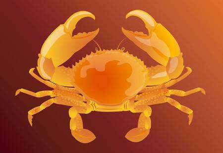 Crabe  Illustration
