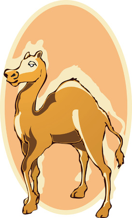 spitting: camel  on orange back ground