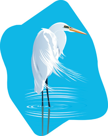 Beautiful Crane searching for fish in  water  Vector