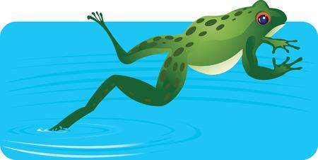 sapo principe: Frog saltos fuera del agua  Vectores