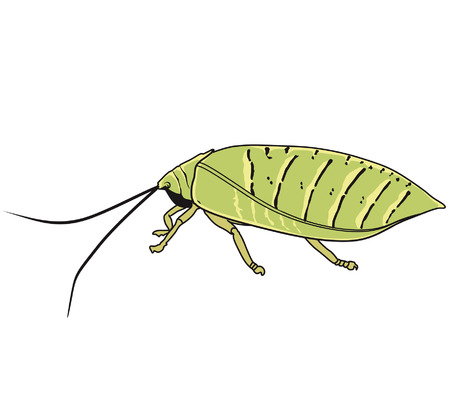 pinchers: Insects with its antenna Illustration
