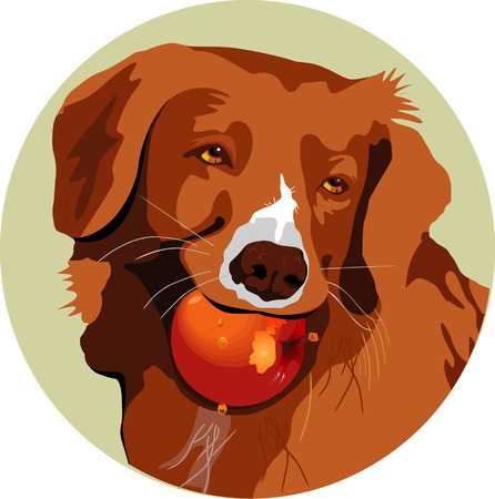 bite apple: Dog with an apple in the mouth