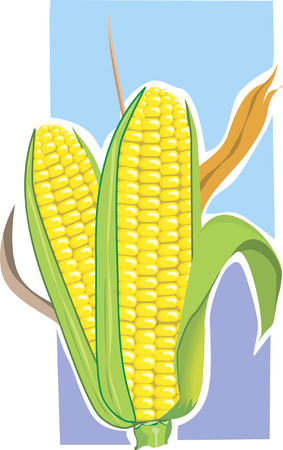 corncob: Pop corn,