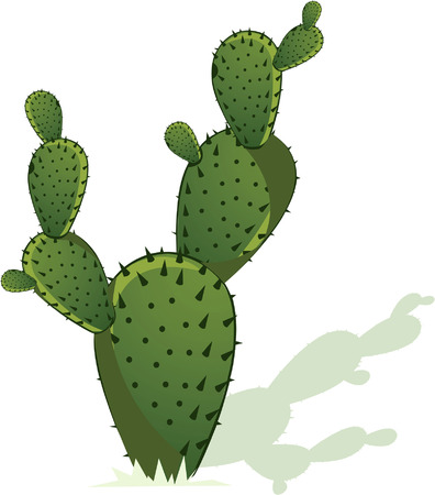 Cactus with its shadow on white back ground Illustration