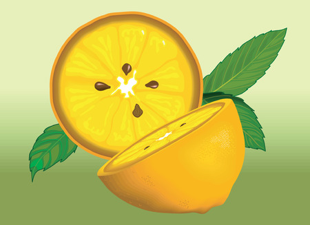 ascorbic: Sliced lemon piece with lemon leaf
