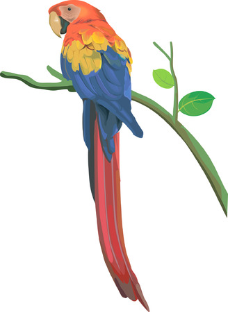 colourful parrot sitting on a branch
