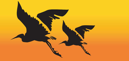 water birds: Two cranes flying
