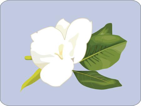White flower with leaves Illustration