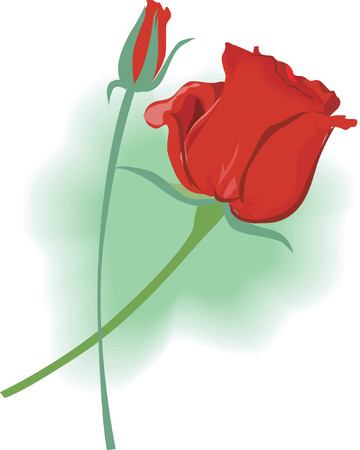 Two beautiful Rose   flower on green background  Illustration