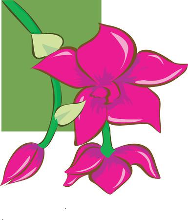 topsyturvy: flowers blooming