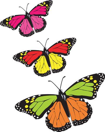 butterfly stroke: Butterflies  flying in the sky.