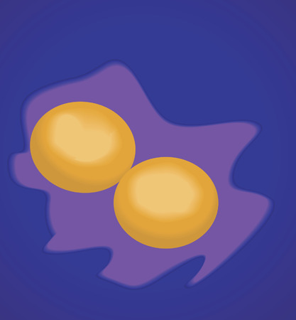 laying egg: Two eggs on blue background