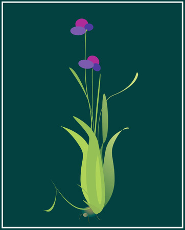 topsyturvy: A plant with flower  Illustration