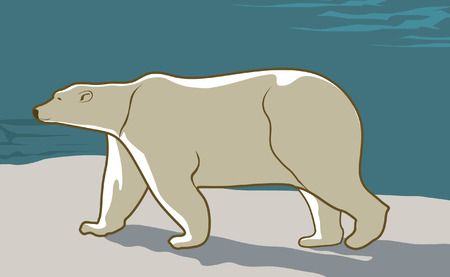A polar bear walking on snow Stock Vector - 2004553