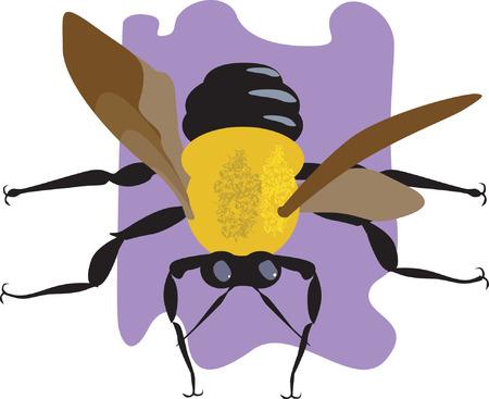 house fly: A house fly Illustration