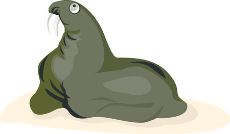 A sea lion looking for something Vector
