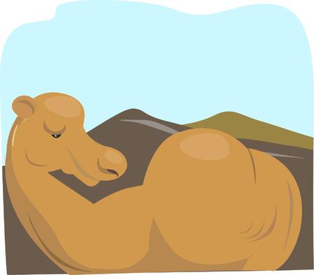 lying in: A camel lying in a desert Illustration