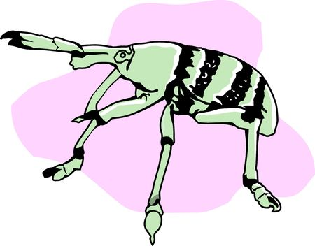 pinchers: Illustration of Insect with antenna walking