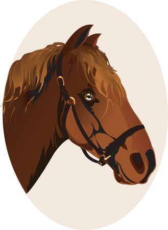 Illustration of horse head illustration