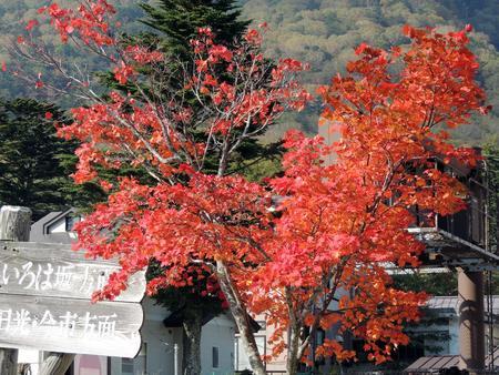 日本: Autumn leaves