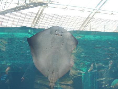 レイの水族館 写真素材 - 90001722