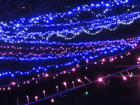 Christmas lights decorate the river