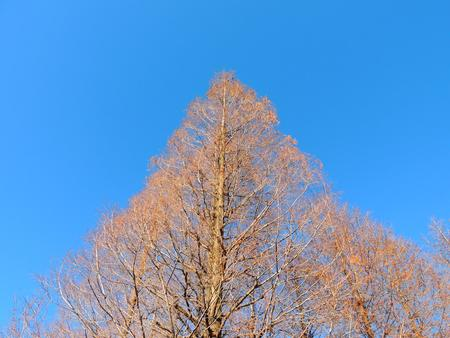 The winter and blue sky