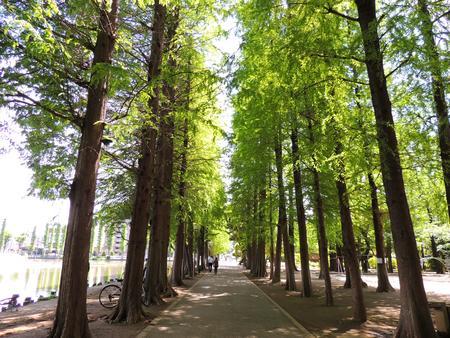 Saitama, Saitama bessho Marsh Park Avenue
