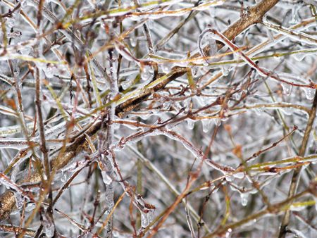 colorful branches and twigs of lilac bush coated in glistening ice