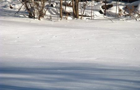 underbrush: Afternoon shadows on fresh snow.
