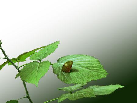 곤충 야생 딸기 잎에서 수액을 빠는입니다.