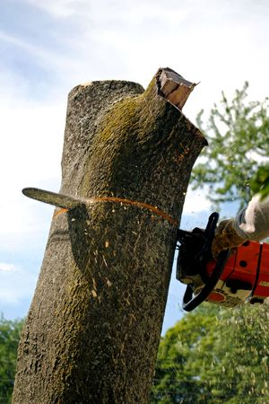 Chain saw cutting through tree trunk Stock Photo