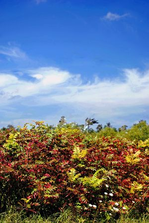 When the sumac begins to turn red, the end of summer is at hand.  Here sumac and white Queen Annes Lace crown a hilltop.
