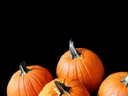 Pumpkins for jack olanterns isolated on black background. Plenty of space for your copy text.