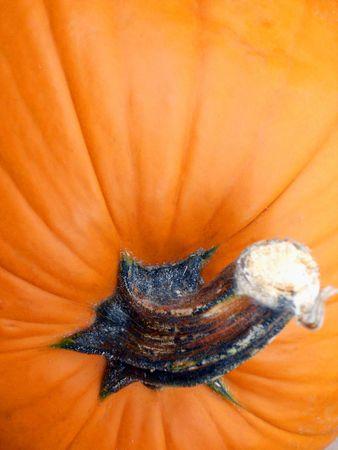 Closeup of pumpkin stem and shell.