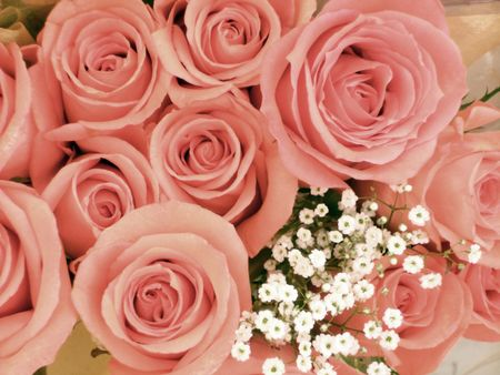 A dozen pink roses with a sprig of babys breath.