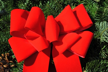Big bright red ribbon bow on evergreens. Stock Photo