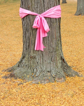 Pink ribbon for October, Breast Cancer Awareness Month, tied around the trunk of an oak tree. Stock Photo - 8753951