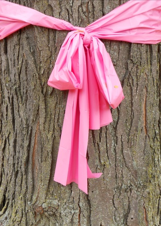 Pink ribbon for October, Breast Cancer Awareness Month, tied around the trunk of an oak tree. photo