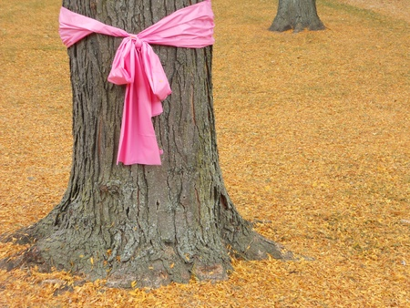Pink ribbon for October, Breast Cancer Awareness Month, tied around the trunk of an oak tree. Stock Photo