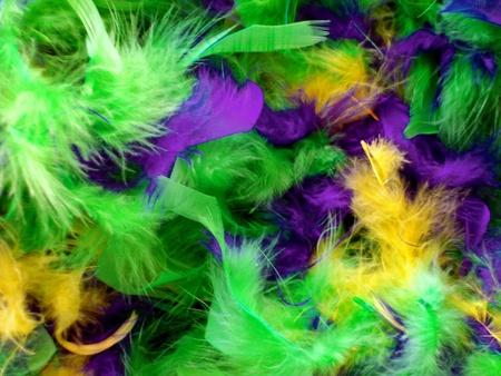 밝은 마디 그라의 깃털은 녹색, 보라색, 금색입니다.