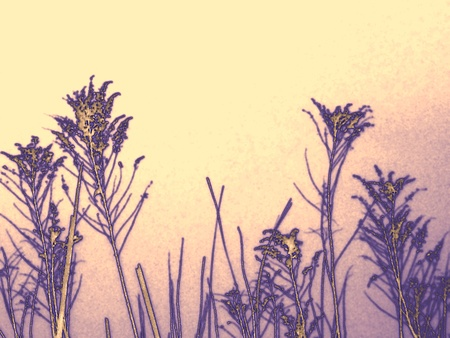 Wild grass flowerheads in purple and taupe against a pink, ivory, and violet background
