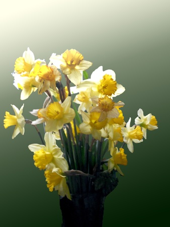 Bouquet of daffodils in a green glass vase on a gradient background.