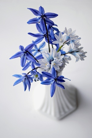 Blue and white scilla in a milk glass vase on neutral background.