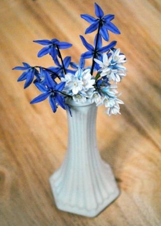 Blue and white scilla flowers in a milk glass vase on a wooden surface. Stock fotó